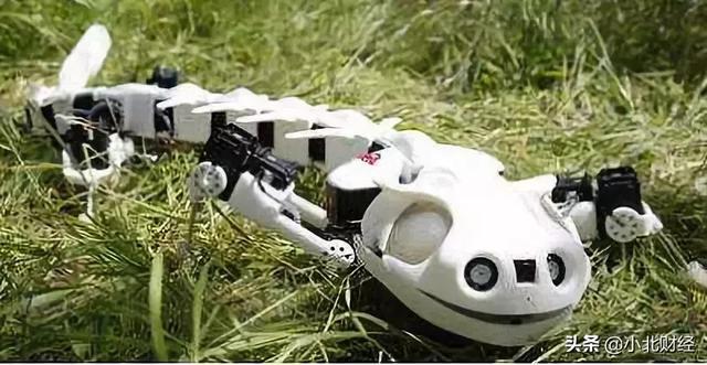 蝾螈机器人.jpg