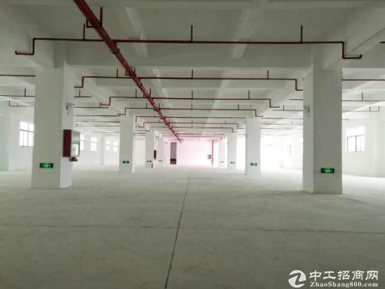 广东江门6900平方独栋标准厂房出租 可分租