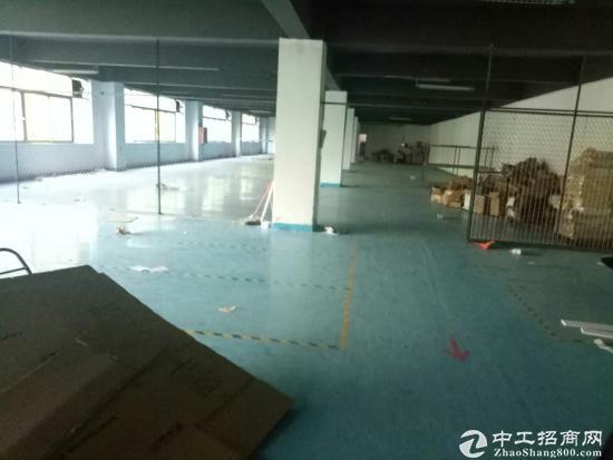 福永高速出入口红本厂房2500平方-图3