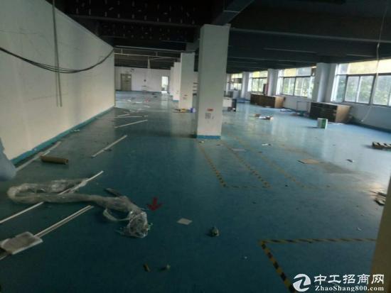福永高速出入口红本厂房2500平方-图2