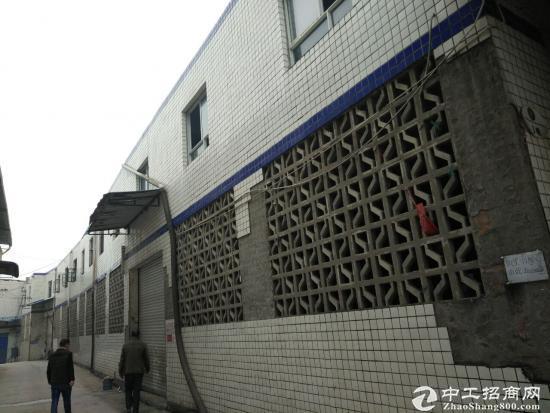 茶园新区江南水岸1200平米厂房、仓库出租-图4