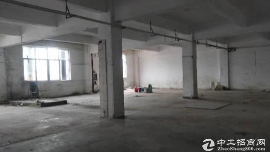 碧岭工业区新出原房东一楼3OO平-图3