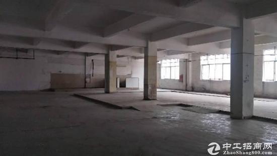 碧岭工业区新出原房东一楼3OO平-图2