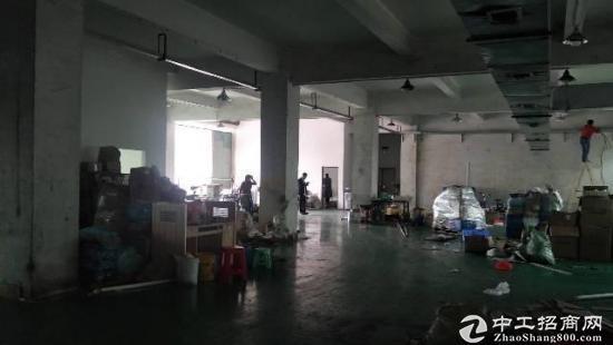 碧岭工业区新出原房东一楼3OO平