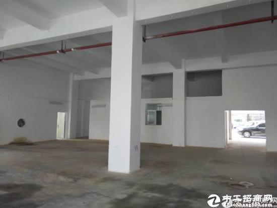 石岩新出一楼620平方招租,5.3米高