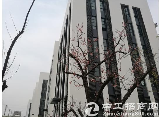 栾城西环标准厂房 5层高每层5.1米 租金3.5毛起-图4
