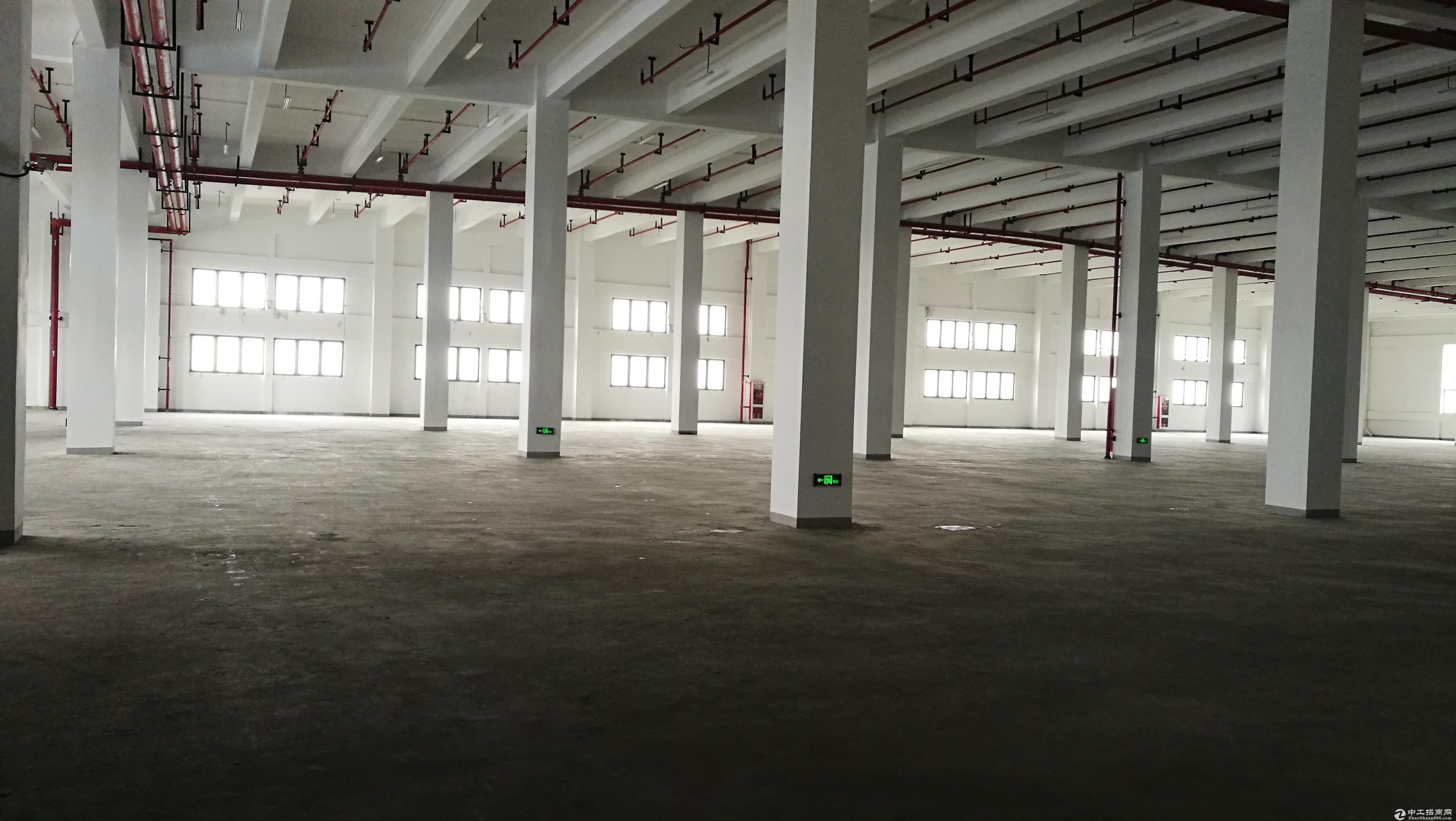 外高桥保税区整层2600平 5楼 层高5米 独立电梯