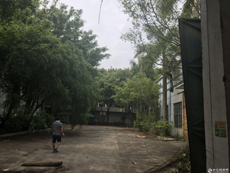 新塘超靓独院5000平方钢结构厂房招租