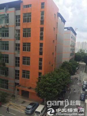 坪山  石井社区 一楼1050平米带地坪装修办公室