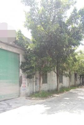 白濠广场附近独栋钢构厂房分租800平米租15块