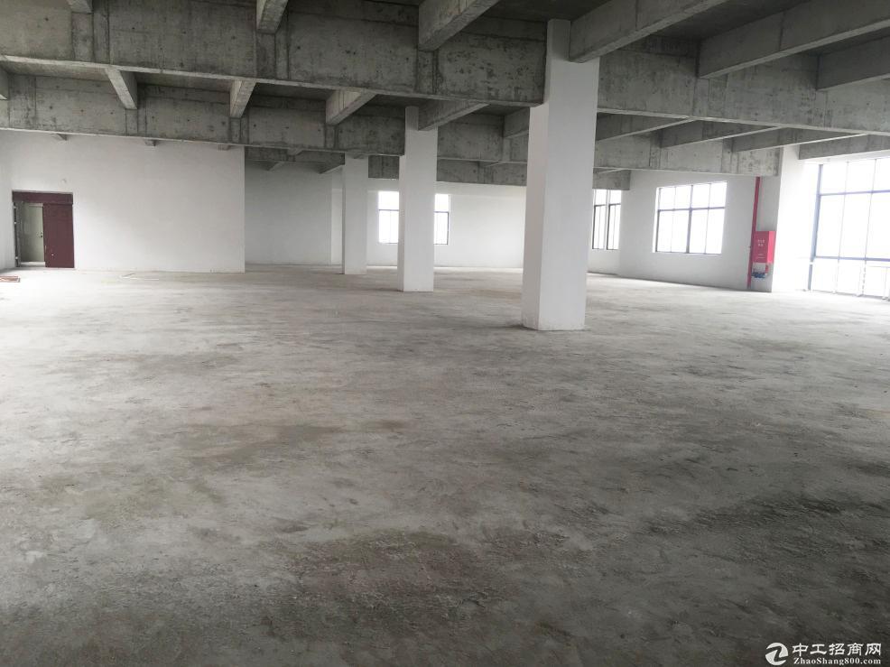 出售江门全新独栋标准厂房28000㎡ 可分割带红本-图4