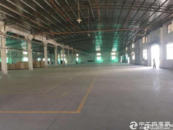 坪山区石井街道新出钢构8米滴水2500平厂房出租