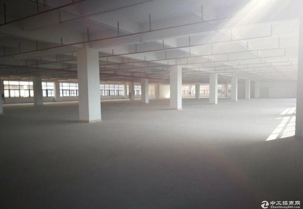 东莞石排独院标准厂房分租一楼1300平方带装修出租