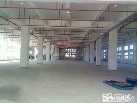 原房东独门独院标准厂房50000平米招租