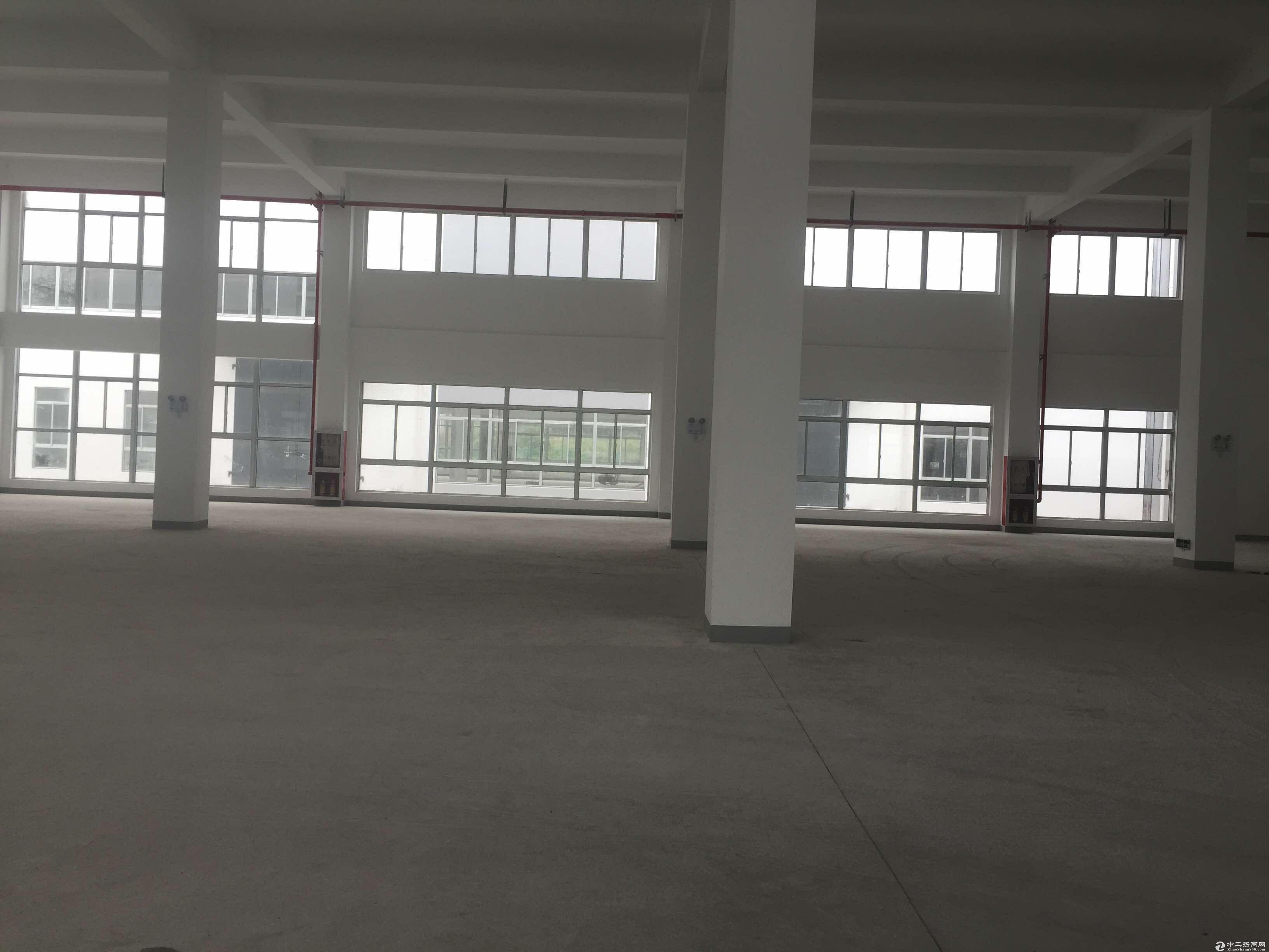 松江车墩无公摊独栋2830平米厂房