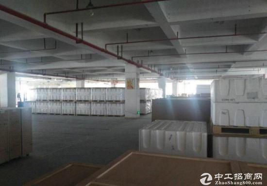 龙岗 同乐深汕路旁红本1楼1200平精装修5米高-图3