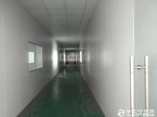 龙岗坪地3780平带精装修独院厂房空地超大可分租-图4