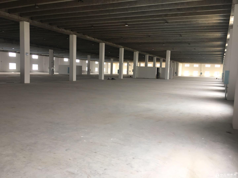 泽兴物流园区2号厂房2楼6000平方招租电商 物流中转 仓储 轻工业加工-图2