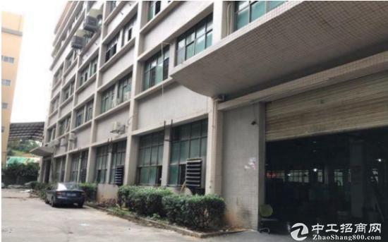 东深公路标准厂房一楼700平招租