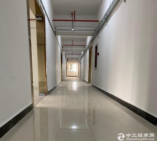 新洲问津孔雀城住宅右侧,标准厂房出租,可分租