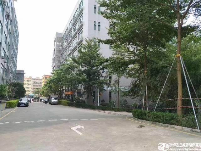 南山西丽白芒关口带红本1楼2楼共4800平方厂房