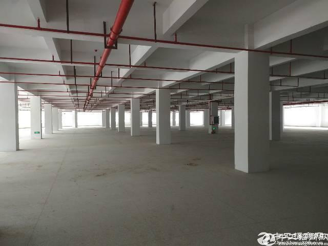 龙岗区单层面积最大的电商厂房共30000平米 1000平起租