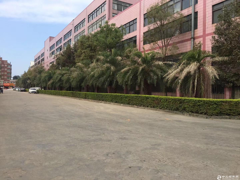 仲恺陈江工业区原房东独栋4000平标准6米高厂房出租-图3