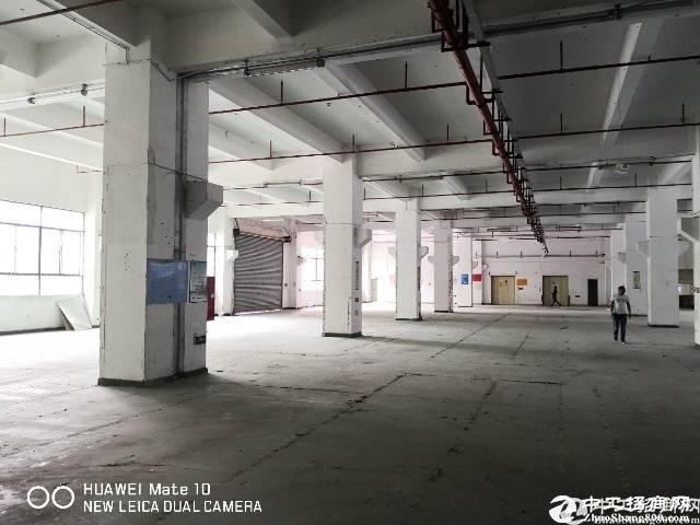 石岩大型科技园厂房一楼1800平方有装修可分租