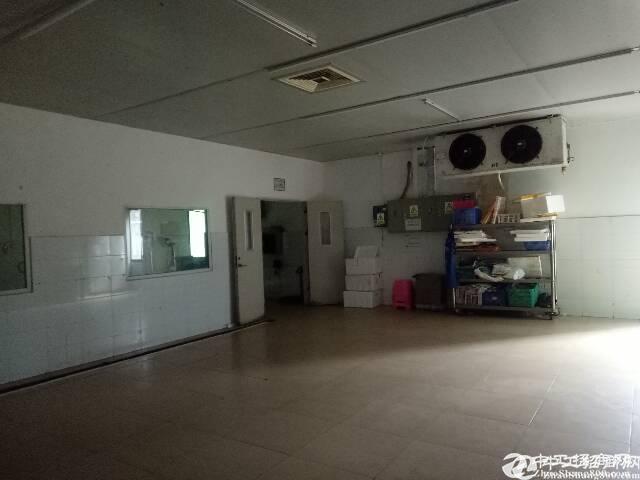 平湖海吉星独院厂房出租5000平米出租,带冻库