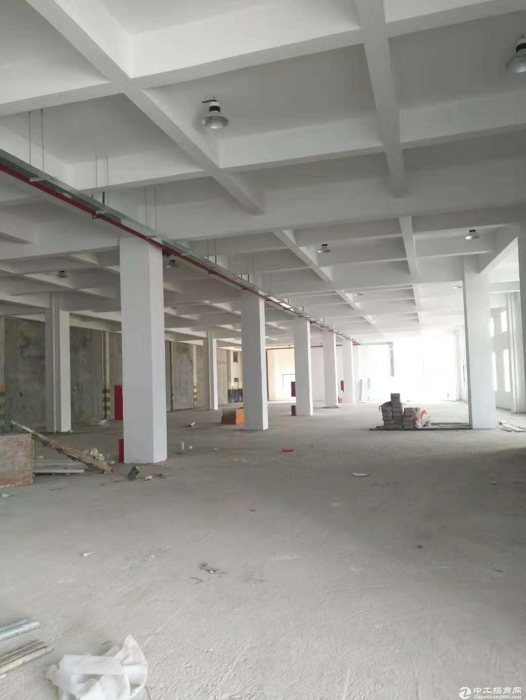 坪山区大工业区原房东带红本3000平现成装修厂房出租.