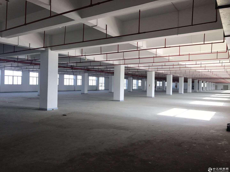深圳坑梓大型工业区附近无公摊1楼1000平方带装修厂房6米高出租