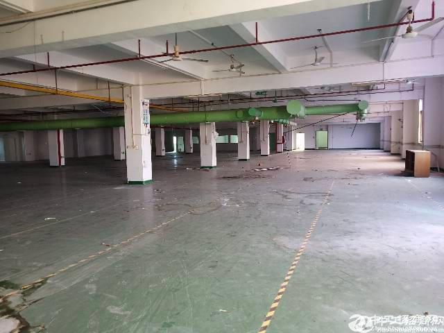 惠阳新圩东风标准4楼4000平招租