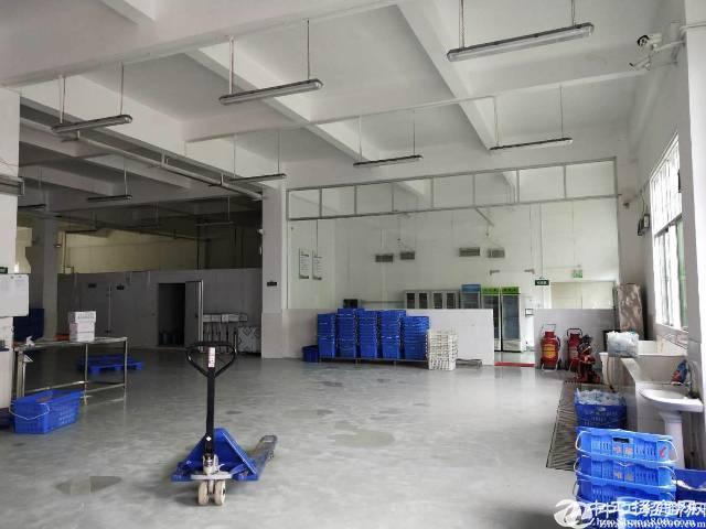 龙岗同乐一楼500平标准厂房招租原房东
