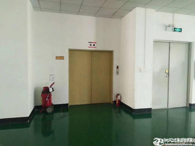 松岗红星新出楼上1500平厂房招租