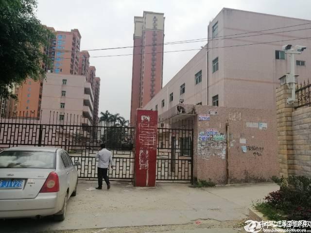 惠阳新圩中心原房东独院厂房3500平方招租