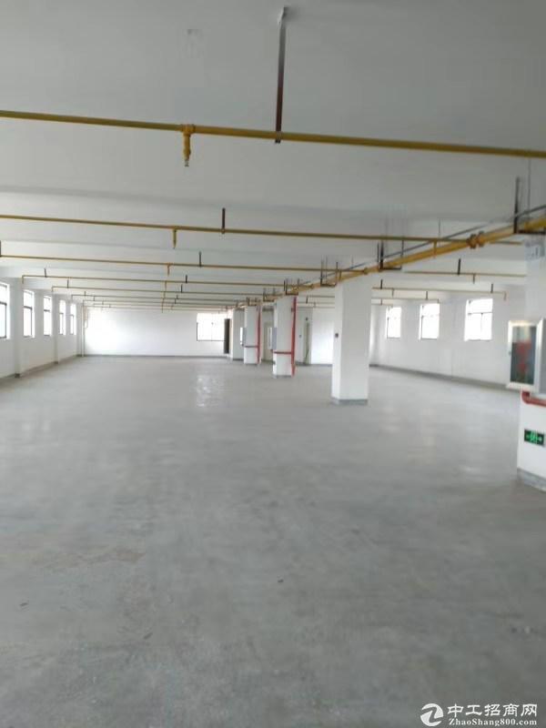 武汉市东西湖吴家山经济区独栋标准库房-图2