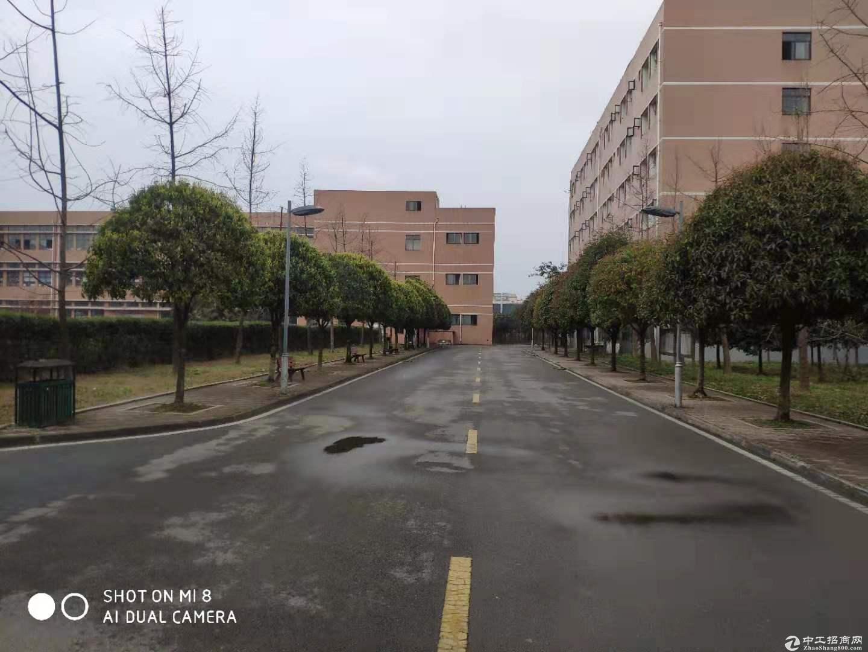 鞋子厂 电子宏业大道中段 厂房出租