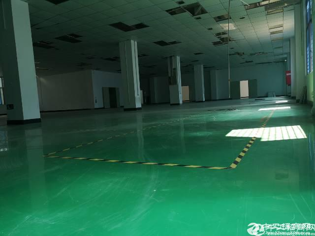 西乡九围2楼面积535平米厂房出租
