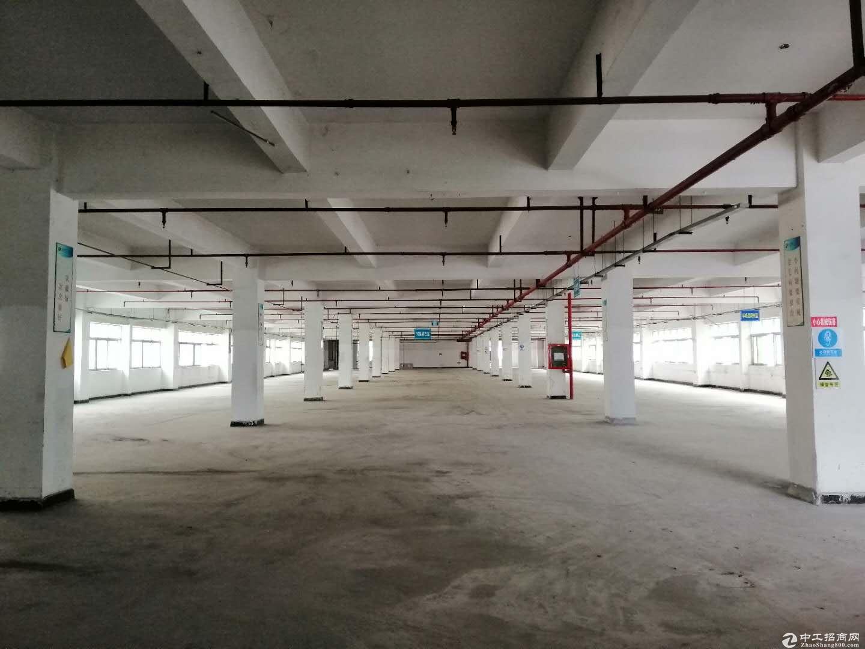 坪地高桥新出11500平独栋标准厂低价.出租