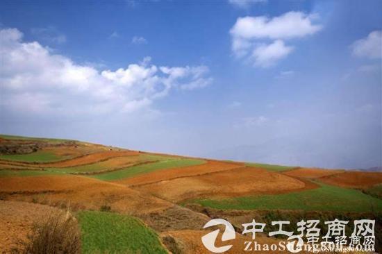 清湖空地加仓库 8万平剩于3万平 适合各种行业 产权合法 三通一平