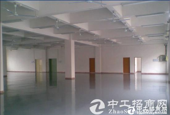 西丽白芒关口,新出楼上655平方厂房出租-图3