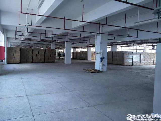 坪山大工业区原房东红本厂房二楼2000平出租,有消防喷淋