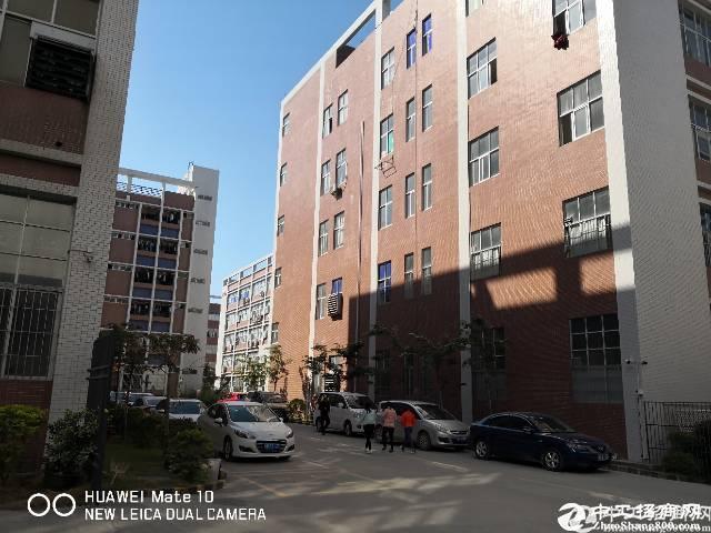 石岩红本高新园2500平厂房出租带喷淋可办环评可分租