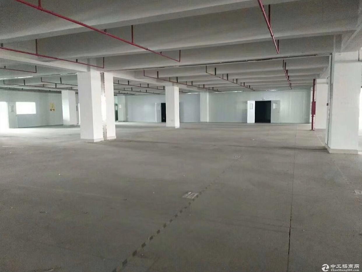 石岩沈海高速口新出标准物流园5600仓库招租