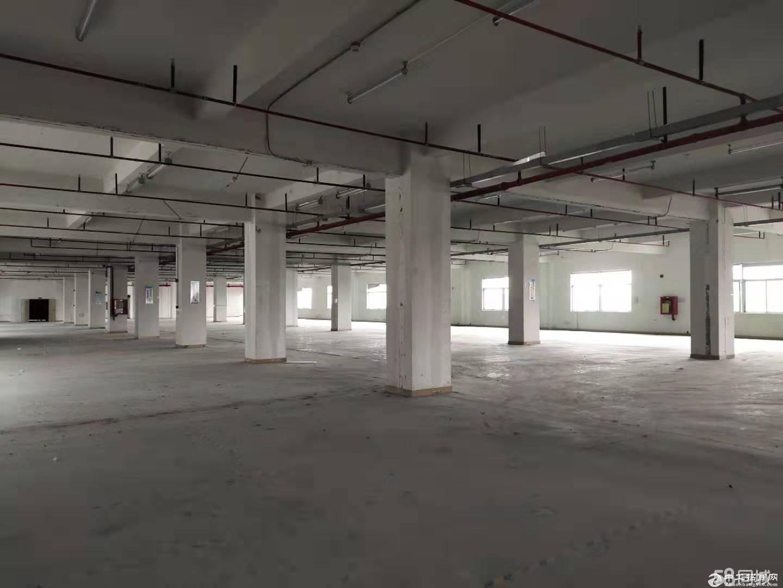石岩村委直租独院6.5万平方,无公摊,价格含税,可分租