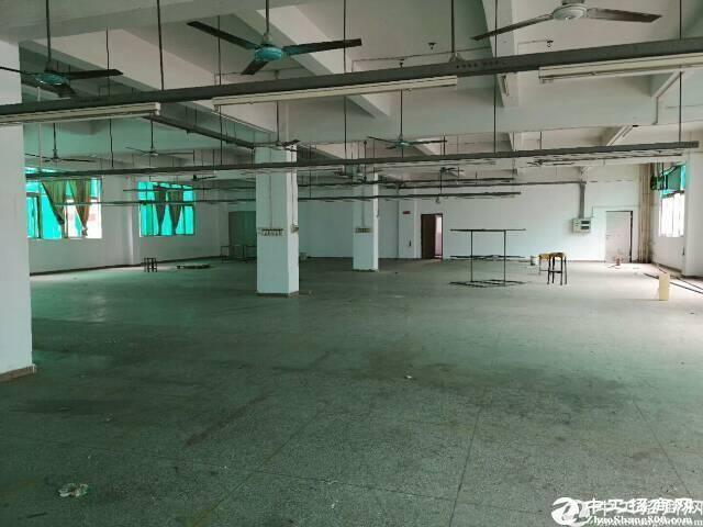 盐田5000平厂房仓库出租,大小分租200平起租图片3