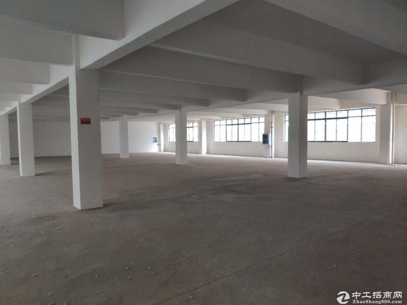 阳逻经济开发区,一楼3000平厂房出租!-图4