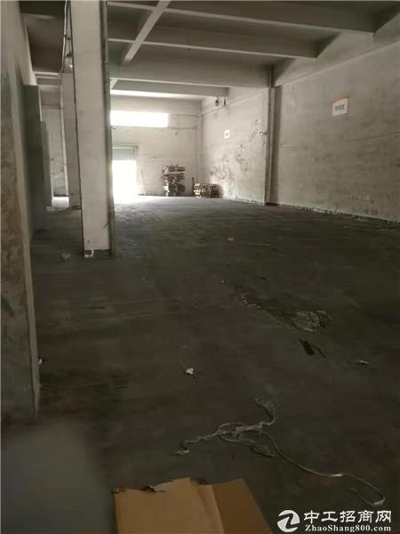西丽 白芒丽康路边 仓库 300平米-图3