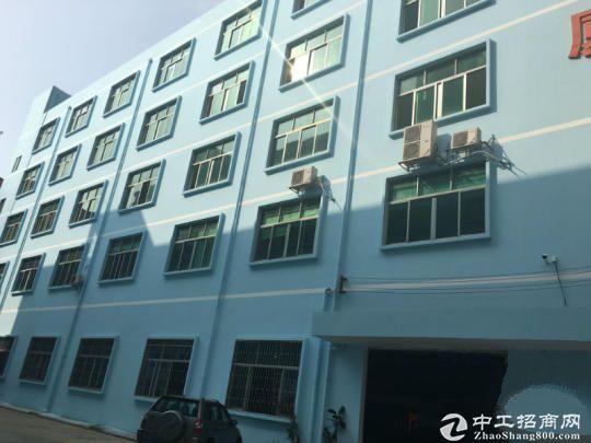 蛇口医院旁430平精装仓库展厅办公室出租 50元一平 精图片2