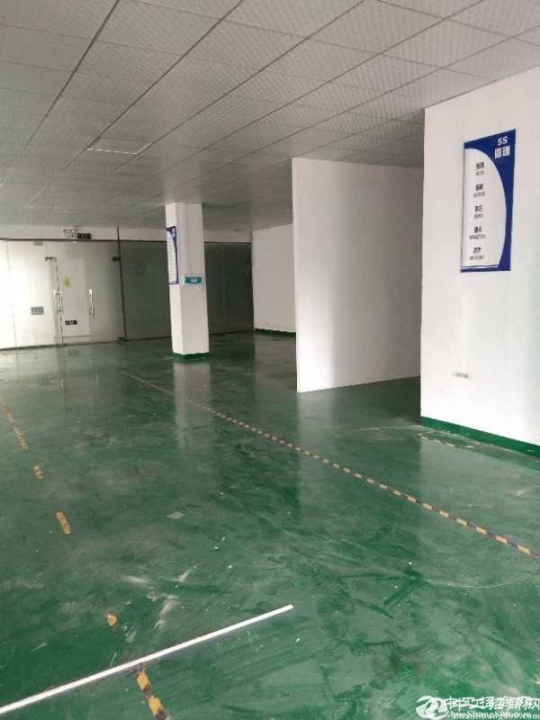 蛇口医院旁430平精装仓库展厅办公室出租 50元一平 精